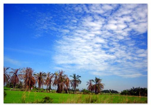 awan rumput