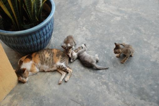 kucing2 copy