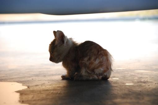 kucing3 copy